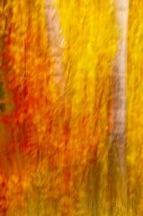 Baum blur 1