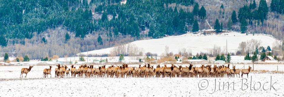 DU593-Elk-Hurd--Pan-(6)