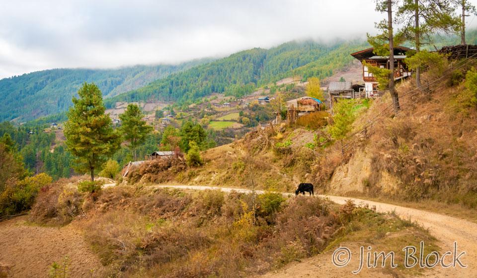 BHU-4911--Tang-Valley--Pan-(3)