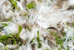 29-app1112-feathers-on-appledore