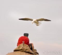 86-app448-fernando-with-great-black-backed-gulls-on-appledore