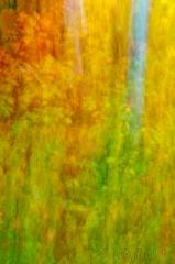 floiage blur