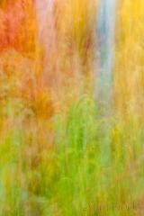 Baum blur 2