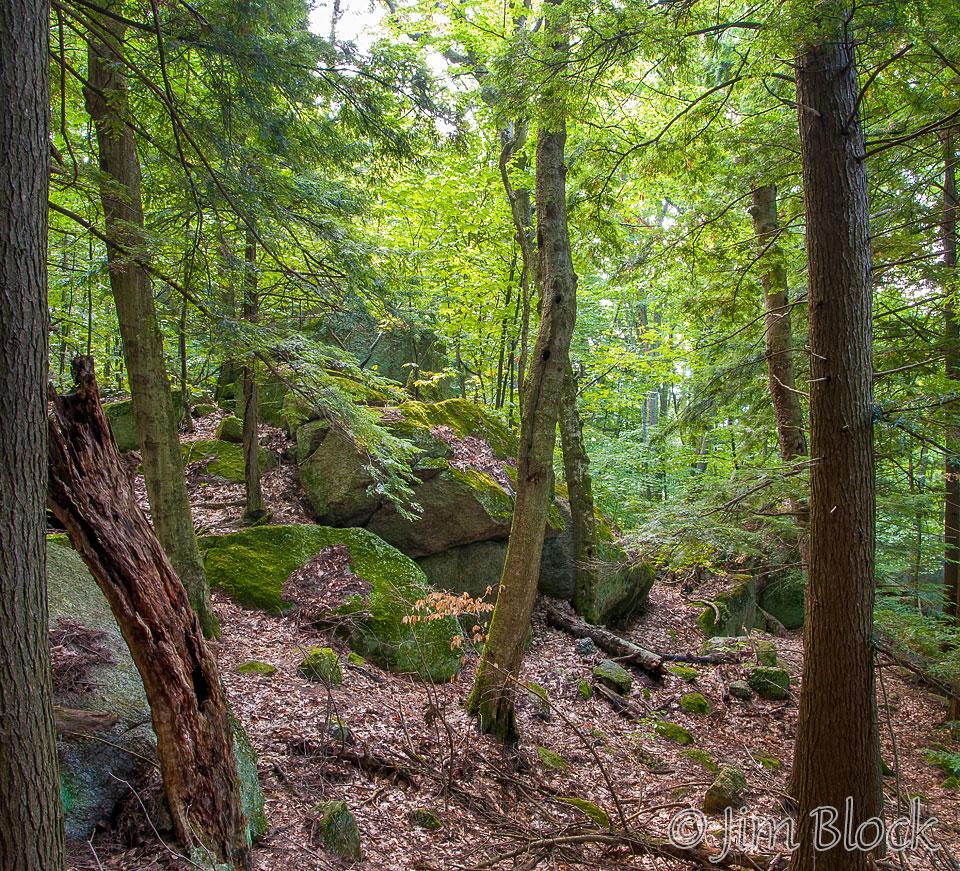 dl682-erratics-in-forest