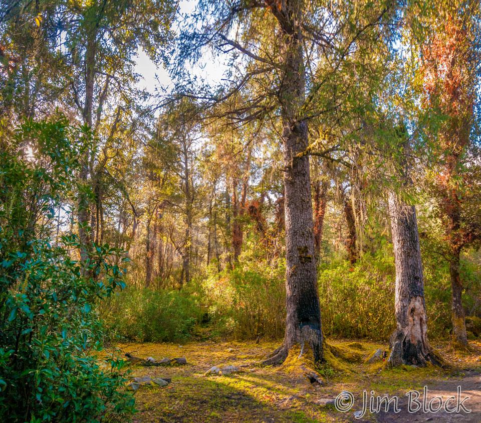 BHU-8854--Mixed-Forests-at-start-of-Trek----Pan-(3)
