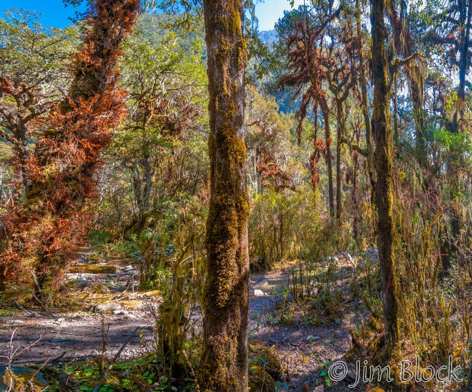 BHU-8872--Early-Oak-Forest---Pan-(4)