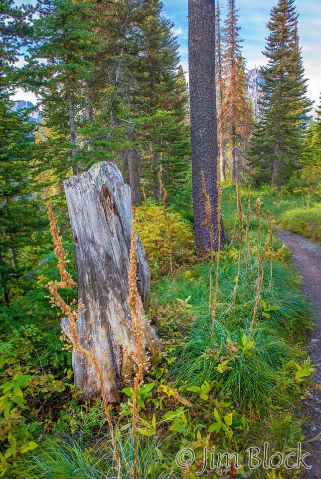 DX787--Pray-Trail---DoF-(3)