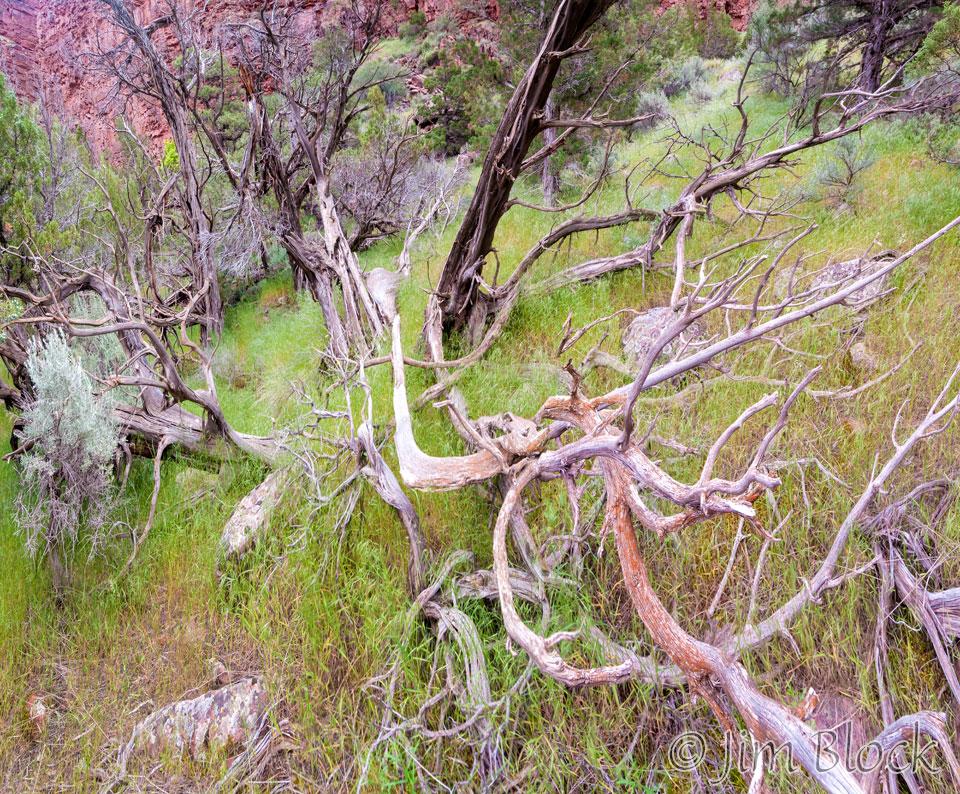 ED449--Dead-Trees-at-Disaster-Falls---Pan-(4)