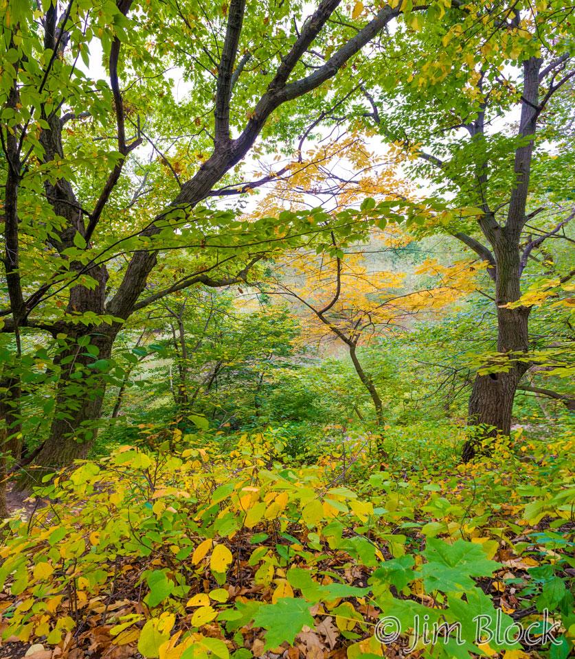 DY236--Trees-near-MWK-River---Pan-(4)