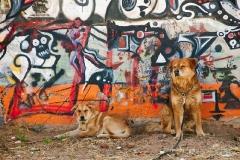 dogs in az