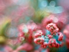 british-soldier-lichen-up-close