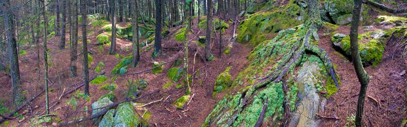 cv271-trail-up-ragged-mountain