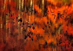 leaves-in-bog-pond