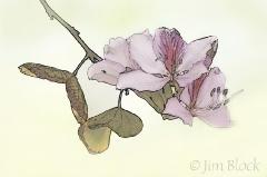 glendale az flower
