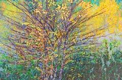 15-cq122-birch-in-fall-sketch