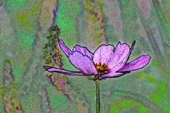 flowers-at-high-pond-farm