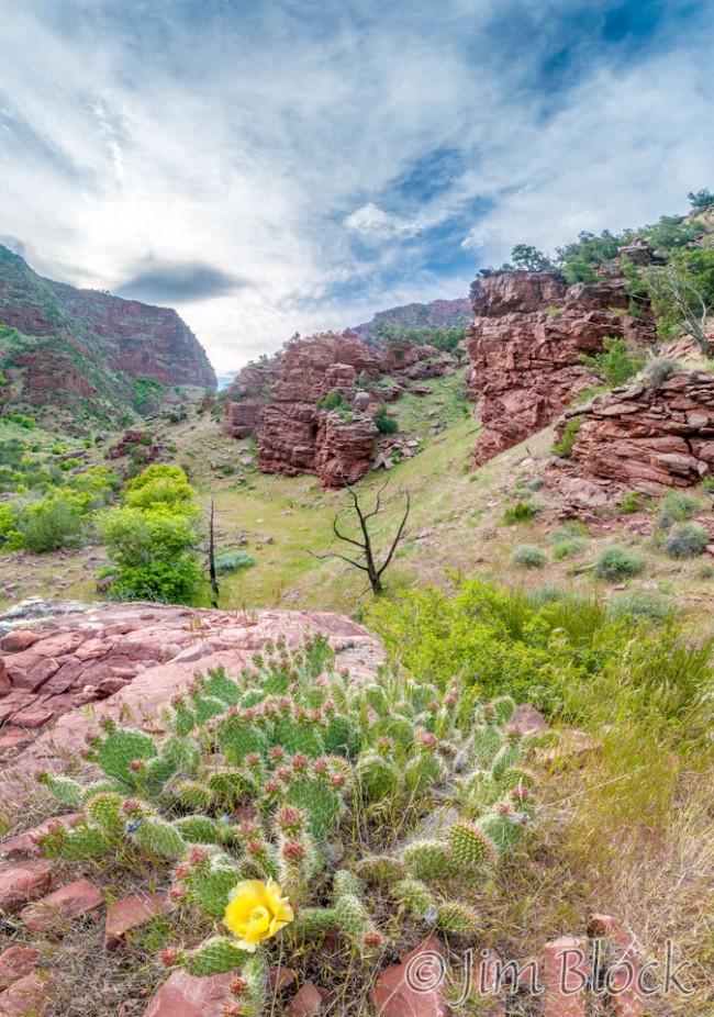 ED479--Cactus-at-Pot-Creek--Pan-(5)