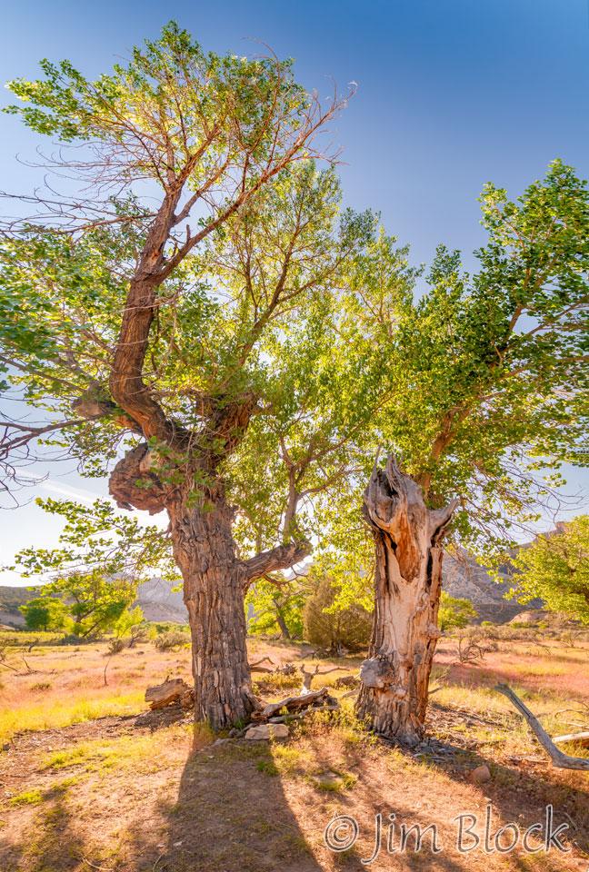 EE038--Tree-on-Big-Island-near-my-bed-spot------Pan-(7)
