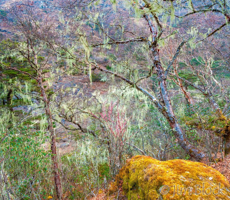BHU-8956--Trees-above-Paro-River-at-Thangthankga----Pan-(2)