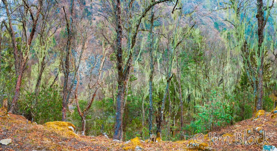 BHU-8958--Trees-above-Paro-River-at-Thangthankga----Pan-(5)