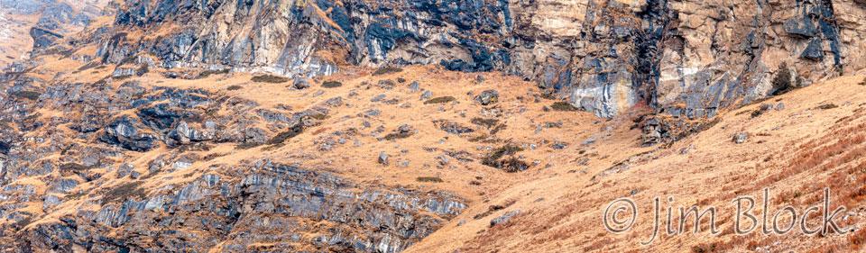BHU-9334--Blue-Sheep-above-Jangothang---Pan-(4)
